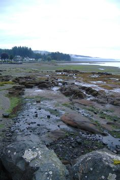 We'll be spending two days in Port Hardy  Vancouver Island, BC before catching the ferry to Prince Rupert.