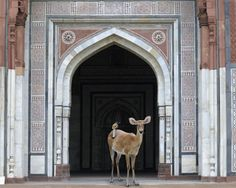 India Song by Karen Knorr Photography