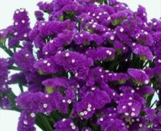 For Chuppah Ara Purple - Sinuata (Statice) - Limonium - Flowers by category | Sierra Flower Finder
