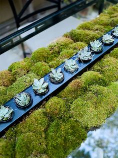 Moss Runner with Succulents.