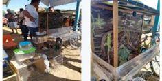 Profepa asegura 18 ejemplares silvestres en tianguis de Oaxaca