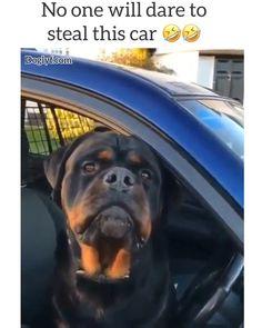 Agents on duty 🤣🤣 - Tiere / pet / animal - Gatos Cute Funny Dogs, Funny Dog Memes, Cute Funny Animals, Cute Baby Animals, Animals And Pets, Cute Animal Memes, Funny Animal Videos, Funny Animal Pictures, Video Humour