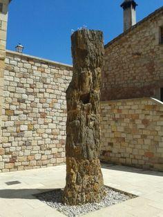 Árbol fosilizado de unos 120 millones de años en Hacinas, Soria.