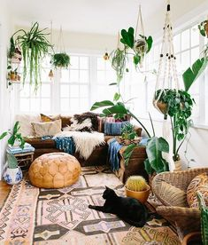 Great design and decor Especially the hanging plants