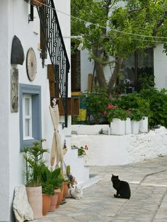 Street View with Black Cat, Manolates, Samos, Aegean Islands, Greece Lámina fotográfica