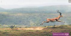 Whiskas Antelope