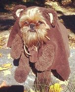 If I had a dog you can bet this would be his Halloween costume this year!!!!!!!!!!