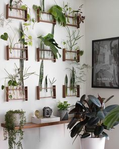 The Plant Doctor's Baltimore Home and Studio Are