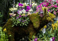 Orchid Elephant at the NYBG Orchid Show #gardening #garden #gardens #DIY #landscaping #home #horticulture #flowers #gardenchat #roses #nature