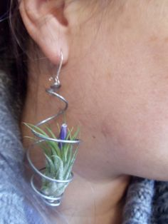 Hey, I found this really awesome Etsy listing at https://www.etsy.com/listing/100211419/pair-of-air-plant-earrings