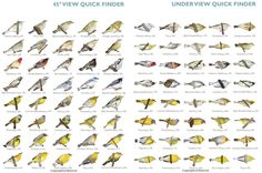 Princeton Press has released for free download the Quick Finder Guide charts from their award winning book, The Warbler Guide (the winner of the 2014 National Outdoor Book Award in Nature Guidebooks).   These are a great help in identifying and enjoying the many warblers in our area.  The link is: http://blog.press.princeton.edu/2013/07/25/downloadable-warbler-guide-quick-finders/