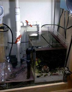 What is a sump? Aquarium Sump, Saltwater Aquarium Fish, Diy Aquarium, Aquarium Design, Saltwater Tank, Aquarium Ideas, Plumbing Drains, Reef Tanks, Fish Tanks