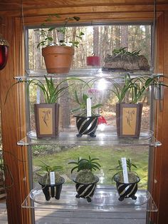 plexiglass plant shelves