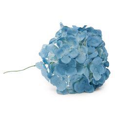 Hortensia de flamenca en color azul pavo.