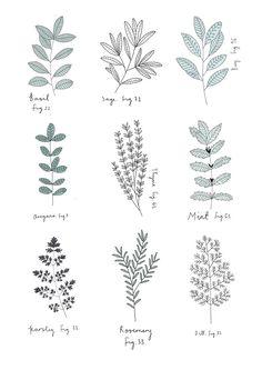 Herb Print. By Ryn Frank www.rynfrank.co.uk