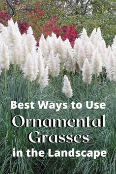 Beautifying your landscape with ornamental grasses is easy with these guidelines for placement and effective uses