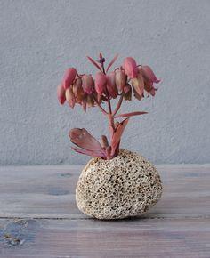 Succulent Plant Pot, Natural Rock Planter, Stone Planter, Hag Stone, Holy Stone, Nautical Beach Home Decor