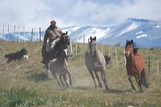 All sizes | Gaucho in Patagonia | Flickr - Photo Sharing!