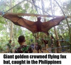 big ass bat! It makes me sad they killed it. Stupid humans nothing is safe ;(