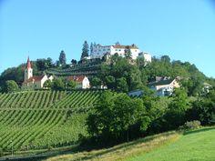 Schloss Kapfenstein Vineyard, Outdoor, Viajes, Outdoors, Vine Yard, Vineyard Vines, Outdoor Games, The Great Outdoors