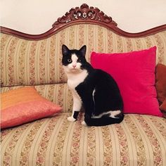 Make sure to check @virgin_honey profile! Cats, Instagram Posts, Honey, Profile, Animals, Check, Decor, User Profile, Decoration