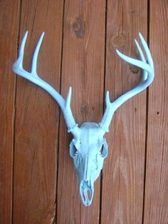 Deer Skull and AntlersTurquoise DecorShabby by HallesHouse on Etsy, $80.00