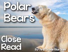 Polar-Bear-Close-Read - First Grade Blue Skies Polar-Bear-Close-Read - First Grade Blue Skies - History Polar Bear Fun Facts, Penguins And Polar Bears, Kindergarten Science, Science Activities, Writing Activities, Winter Activities, Close Reading Activities, Guided Reading, Artic Animals