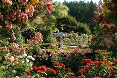 The Rose Garden ~ at the Butchart Gardens in Canada