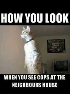funny images of tweeker peeking out the blinds | usually peeking out of the blinds to see what s going on
