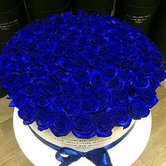 blue, rose, and flowers resmi Luxury Flowers, Exotic Flowers, Blue Flowers, Yellow Roses, Beautiful Rose Flowers, Beautiful Flowers Wallpapers, Flower Boxes, My Flower, Box Roses