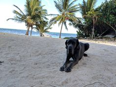 I quit my job and moved to Belize. – Gringo With A Great Dane I Quit My Job, Great Friends, Belize, Journey, This Or That Questions, Blog, Animals, Animales, Animaux