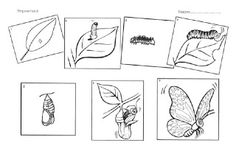 Cyclus vlinder (schrijfwerkblad!) Spring Theme, Zoology, Life Cycles, Science Nature, Little Ones, Homeschool, Butterfly, Montessori Preschool, Knowledge