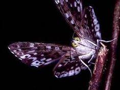 Résultats de recherche d'images pour «purple moth»