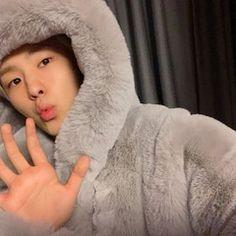Woozi, Wonwoo, Jeonghan, Carat Seventeen, Hoshi Seventeen, Boys Are Stupid, Adore U, Iconic Photos, Pledis Entertainment