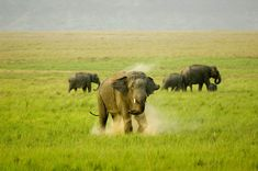 Jim Corbett National Park does not require any kind of introduction because it is one of the most fascinating tourists' locations in India