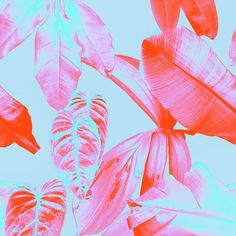 rhianna ellington : botanical