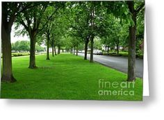Avenue of Trees at Port Sunlight Greeting Card by Joan-Violet Stretch