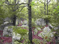 The Keystone Ancient Forest in Sand Springs, Oklahoma is made up of trees that are 300 to 500 years old. This 1,300 acre nature preserve has primitive hiking trails and plenty of natural beauty.
