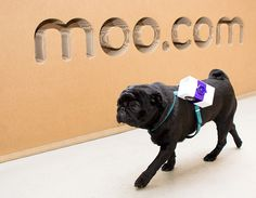 Moo.com's Delivery Pugs | The Definitive Guide To Every April Fools' Day Prank On The Internet This Year