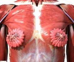 What a female breast really looks like http://ift.tt/2dOjyXV