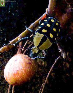 Insect Photography, Insects, Africa, Animals, Animales, Animaux, Animal, Animais