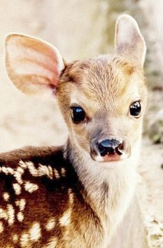 Bebe Deer! cute animals adorable deer animal pictures