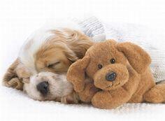 Funny Sleeping Animals