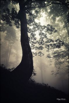 The forest by philippe MANGUIN photographies, via Flickr  www.photosdebretagne.com