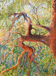 madrona tree painting