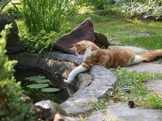 A couple of funny cats take an adventure in their own backyard. Does your cat have adventures in the back yard or do you keep your baby inside where it's nice and safe? Animals And Pets, Funny Animals, Cute Animals, Crazy Cat Lady, Crazy Cats, Photo Chat, All About Cats, Tier Fotos, Ginger Cats