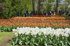 Keukenhof garden - Holland www.aruralchiclifestyle.com Amsterdam Travel, Holland, Trips, Garden, Flowers, Plants, Outdoor, The Nederlands, Viajes