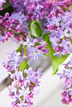 I just love the smell of lilacs!!