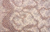 Beaded Chantilly Lace (B&J Fabrics)