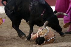 Muere el torero Iván Fandiño corneado en una plaza del sur de Francia | Toros | EL MUNDO